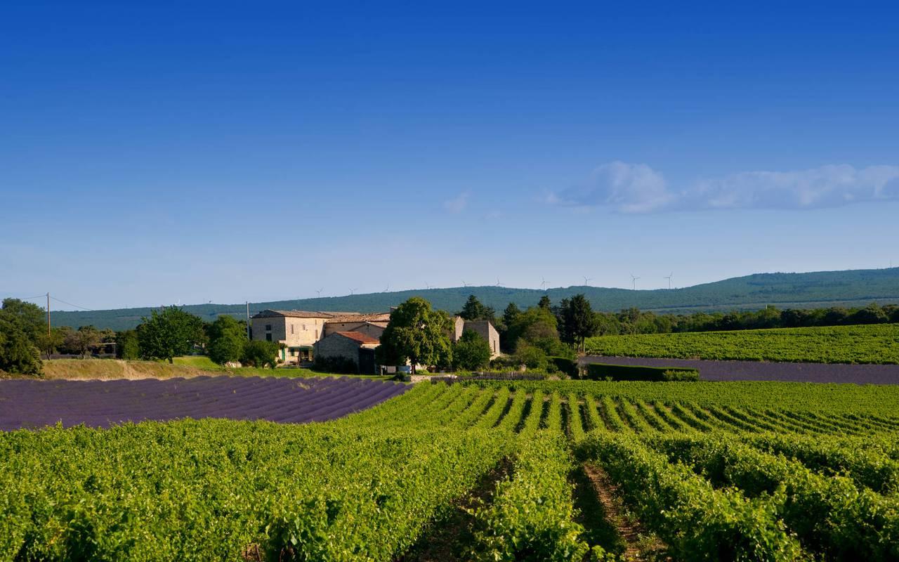 Hôtel et spa de luxe avec d'incroyables paysages provençaux